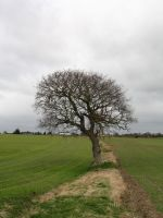 Tree In A Field II by Its-Only-Stock