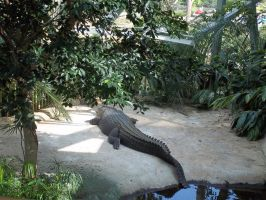 Crocodile by Sabbelbina