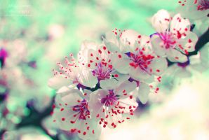 Blossoms by AliCat2011