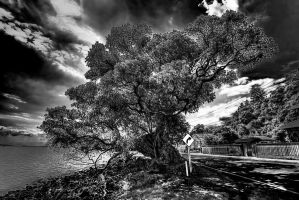 another tree by crh