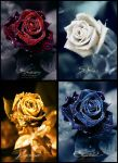Coloured Roses by TorihimeCosplay