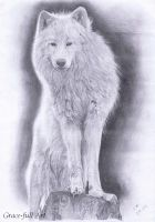 A white wolf by Grace120899