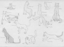 Warrior Cats - Random Group 2 by SaAsMiAoNa