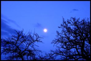 Blue moon by JoInnovate