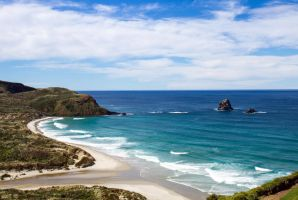 Seal Point by ARC-Photographic