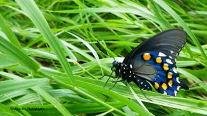 Butterfly Beauty by AnotherEve