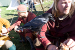 DSC01894 Young Raven by wintersmagicstock
