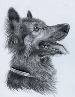 German Shepherd Sketch by mittenstheninjakitty