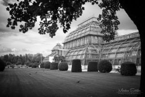 Palm House by spike83