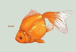 goldfish without glass by DasBella