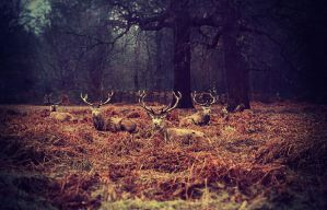 Richmond Park by KristynaVyslouzilova