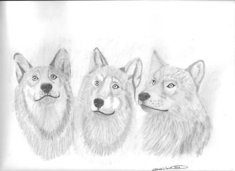 Wolves by love0408
