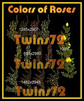 Colors of Roses by Twins72