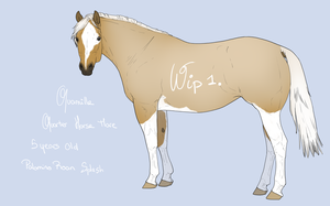 Ref Quamille by BH-Stables