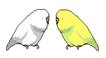 Fat Budgies by EmptyShadow
