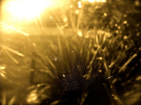 Spider Web - Photography by VixenIchigo