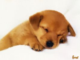 Sleeping Puppy by fmr0