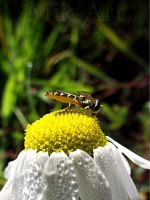 Bubble Wasp by photomik-art