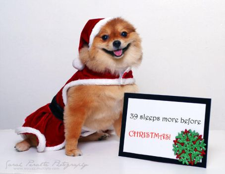 Doggie's Christmas Countdown by pinay-malaya