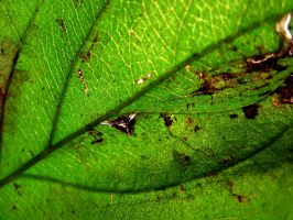 Nature's Green by thistlesis