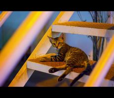 Urban Cats - 16 by MARX77