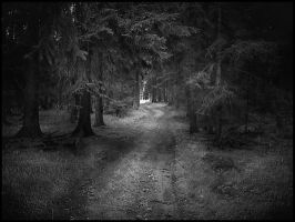 the dark forest by sternenfern