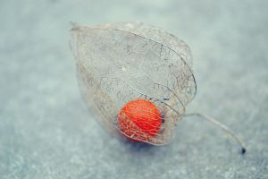 .:Physalis:. by bogdanici