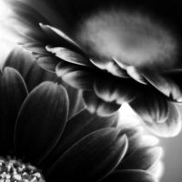 caresses II by julie-rc