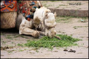 Camel Lunchtime by WorldII