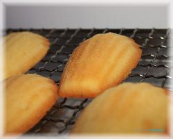 Brown Butter Madeleines 2 by munchinees