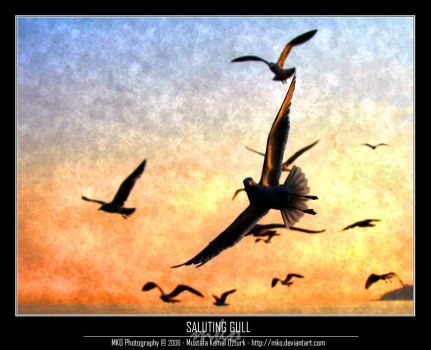 Saluting Gull by MKO