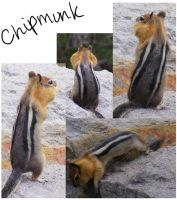 Chippy by FlowerKiss
