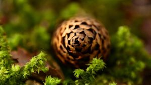 Lost Pine Cone by francis1ari