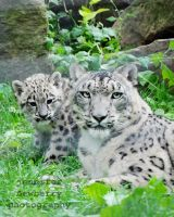 Tiga and Cub 10 by filemanager
