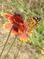 Butterfly with it s friend by LenaSt63
