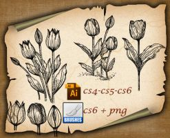 Tulip Brushes by roula33