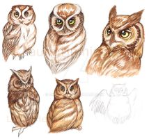 Owls by Scharach