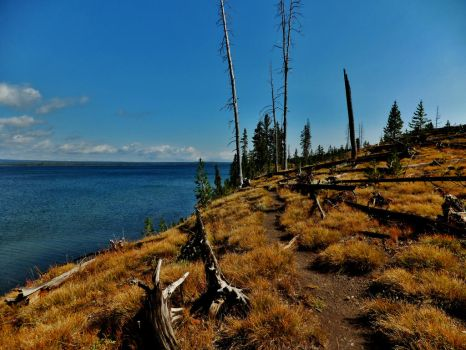 Lewis Lake, Yellowstone NP by bootlacephotography