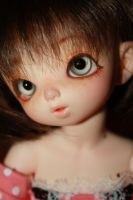 .:Close Up:. by moofestgirl