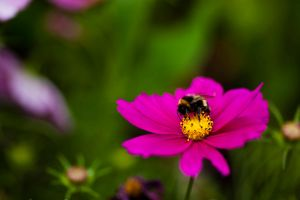Bumble by JosCos