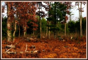 Autumn Forest Soft View by MissNioniel