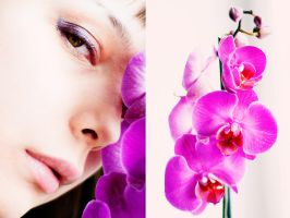 Purple orchid by Moonnight