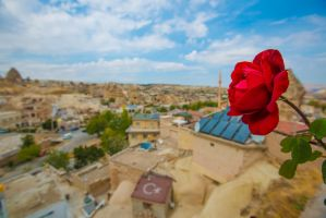 Rose from Cappadocia, Turkey by bluejay88