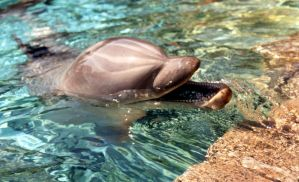 Dolphin by Sweetpeapix