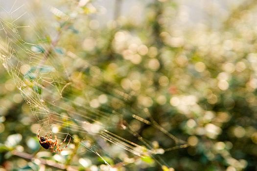 Spider by iTux