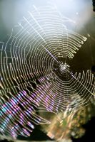 spider web by stade