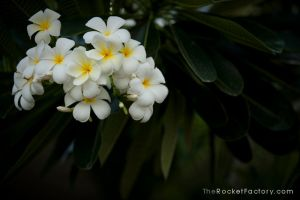 White Flowers by frankrizzo