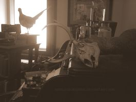 Taxidermist's Office by PixiePoxPhotography