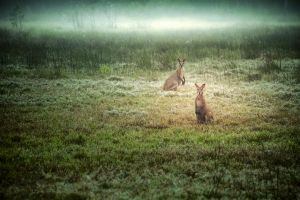 Marsupials in the Mist by Questavia