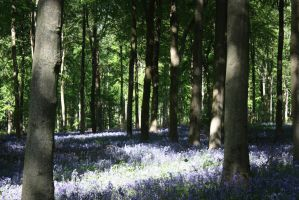 Bluebell Wood 5 by Topaz172